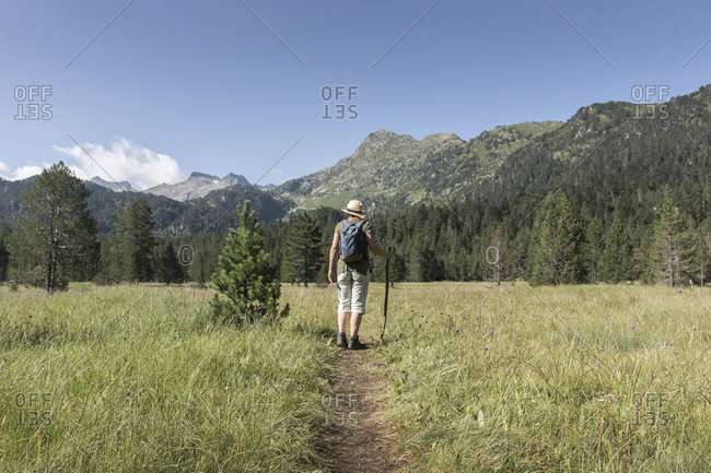 Rear view of female hiker with backpack standing on trail amidst plants against blue sky in forest