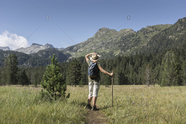 Rear view of female hiker with backpack and stick standing on trail amidst plants against blue sky in forest