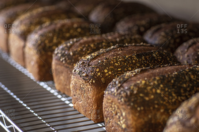 Loaves of wheat bread cool on a rack after coming out of the oven