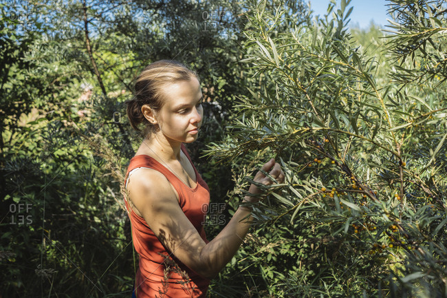 Side view of female farm worker picking berries from plants in farm