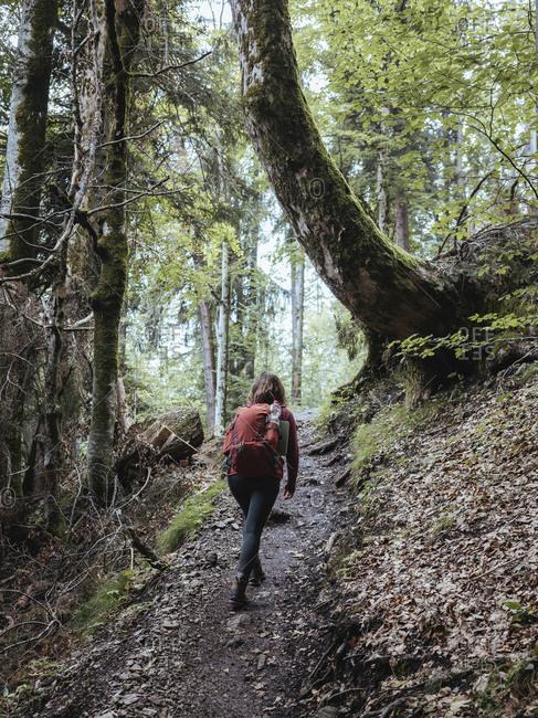 Rear view of female backpacker walking in forest