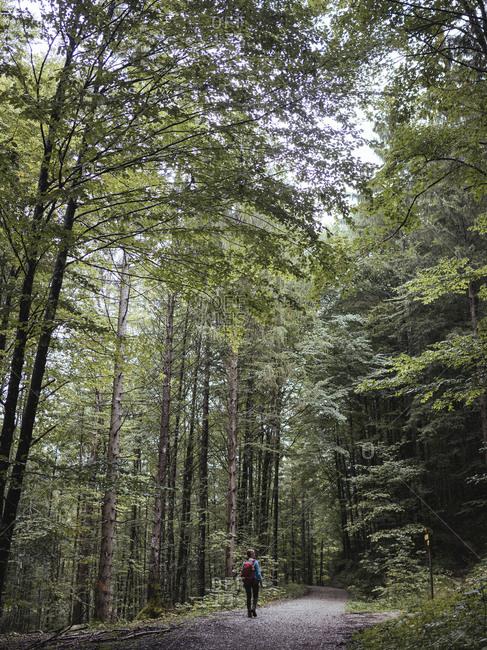 Full length of female backpacker walking in forest