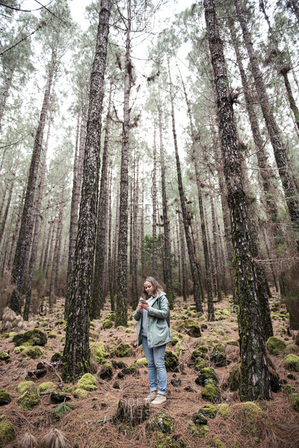 Young female using smartphone while walking in coniferous forest