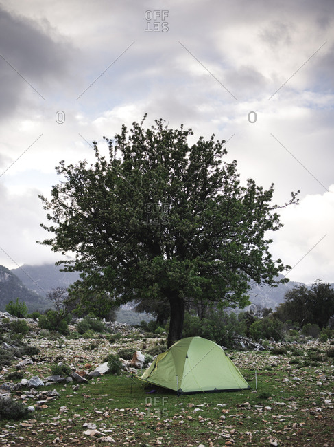 Green tent on grass under tree in mountain valley against cloudy sky