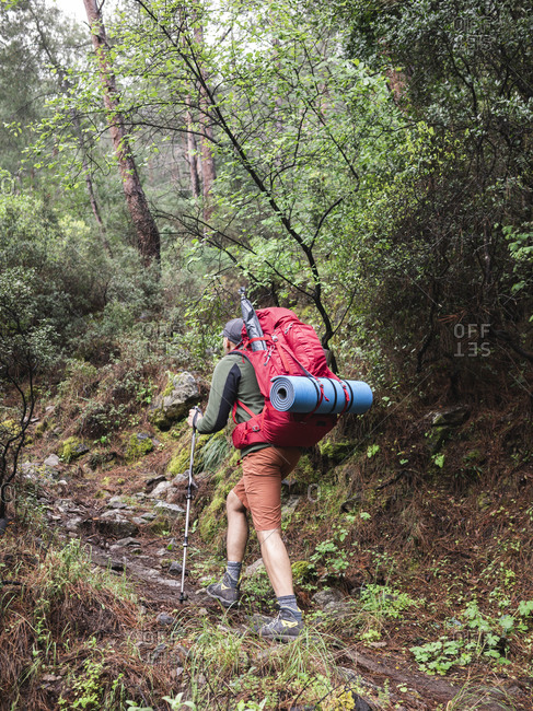 Rear view of young man climbing up by rocky footpath in green forest