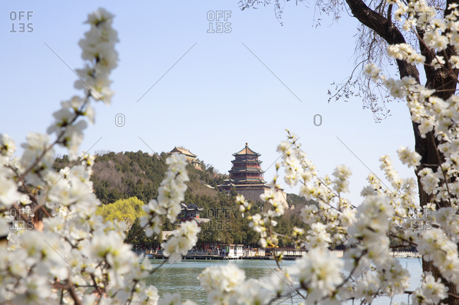 Spring blossoms with the Peace pagoda in the distance at the Summer Palace, Beijing, China
