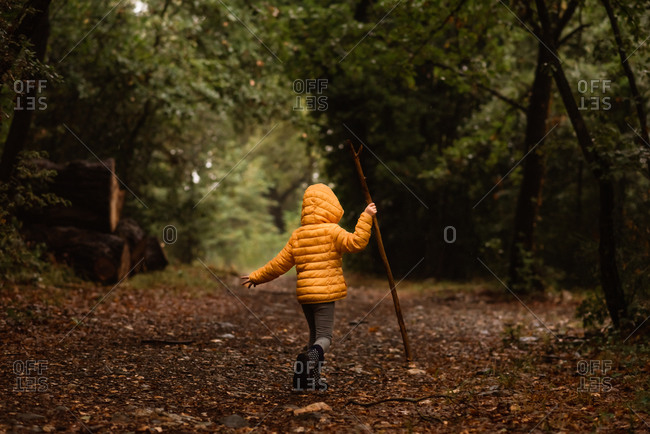 Young child with stick walks in forest in the rain in yellow jacket