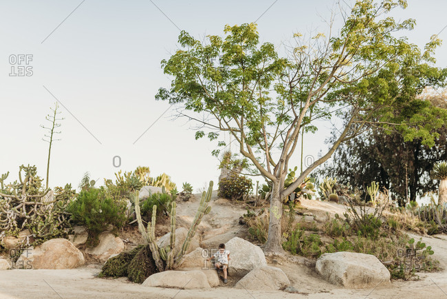 Landscape of cactus garden with preschool aged boy climbing rocks