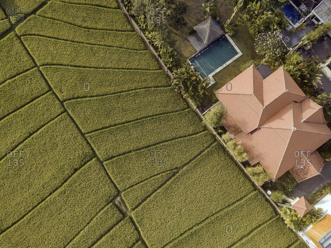 Aerial view of villa and pool in rice fields