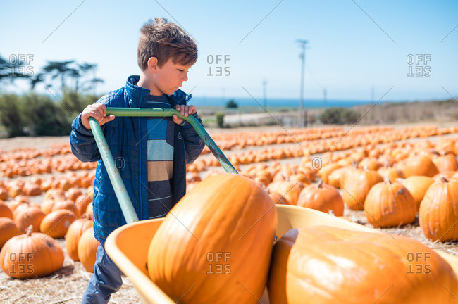 Boy pushing wagon full of pumpkins in pumpkin patch near coast