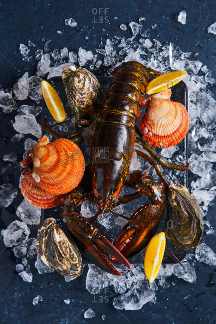 Lobster on a block of ice with lemons, oysters and clams