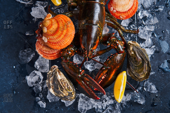 Close up of a lobster on a block of ice with lemons, oysters and clams