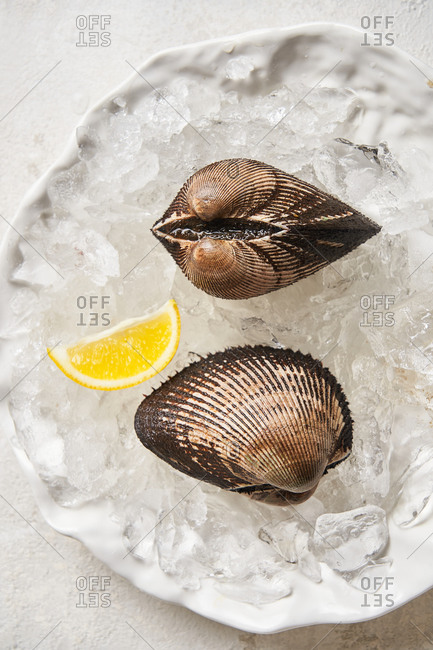 Clam appetizer and lemon in a dish with ice