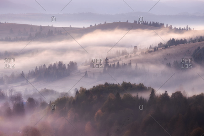 Misty landscape with fir mountain forest. Panorama view of mountain before sunrise