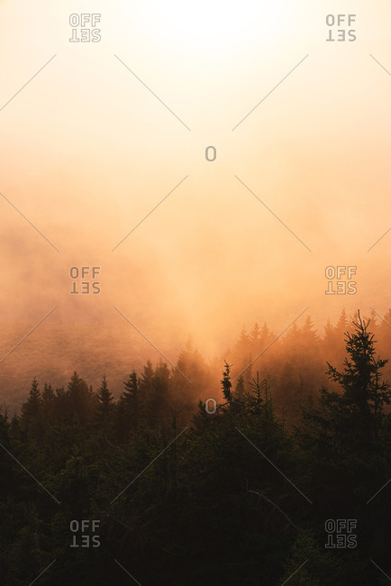 Tree silhouette on a misty morning at golden light during autumn