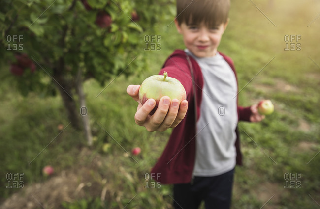 Boy holding fresh picked apple on extended arm beside an apple tree.