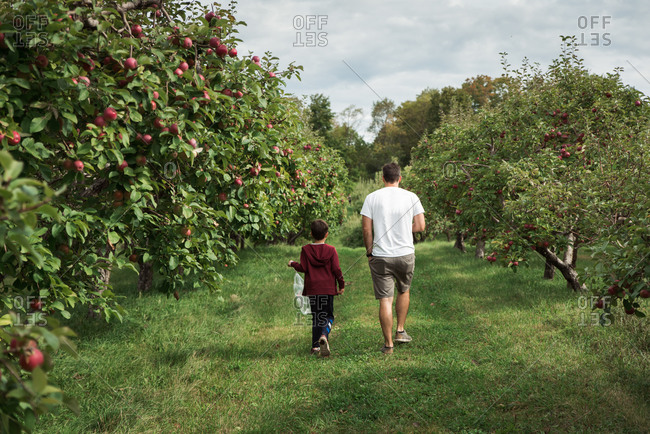 Father and son walking through an apple orchard in the fall together.