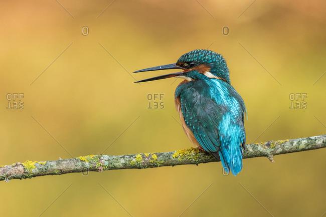Kingfisher, ornithology, fishing, river, bird
