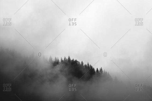 Mist swirls around a mountain covered in pine trees in Washington