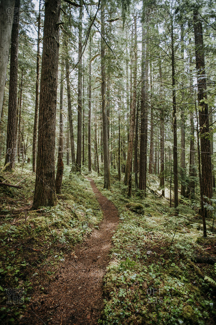 A hiking trail winds through forest in North Cascades National Park