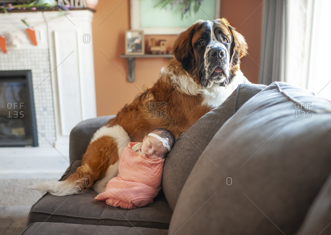 Newborn baby girl snuggling with large dog at home on the couch