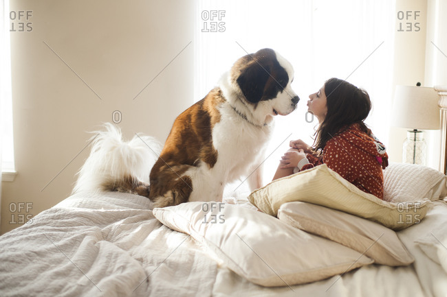 Young girl sitting on bed with large dog about to kiss him on the nose