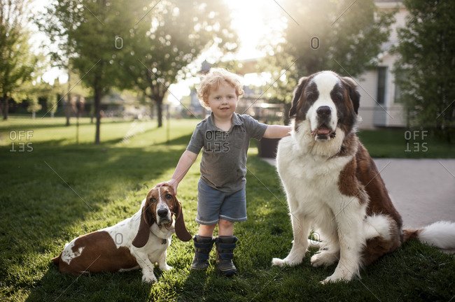 Toddler boy standing grass with 2 dogs in backyard in pretty light