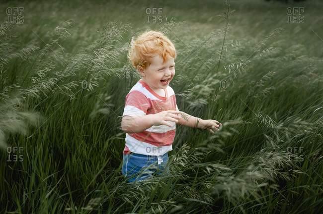 Toddler boy 1-2 years old standing and laughing in long blowing grass