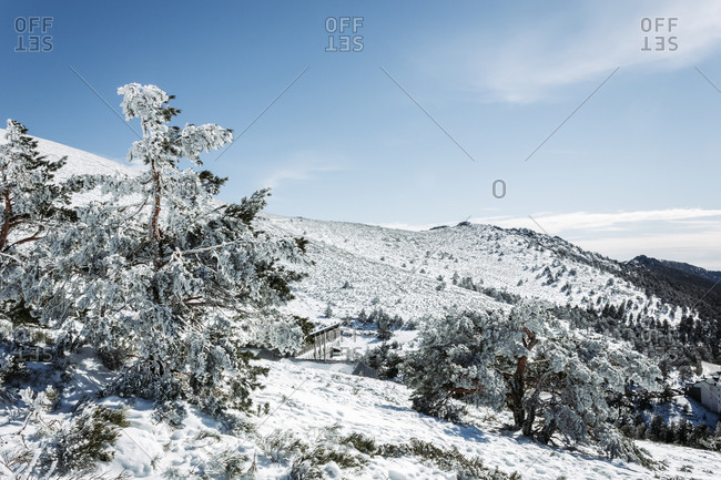 Snowy mountains and trees in the port of Navacerrada