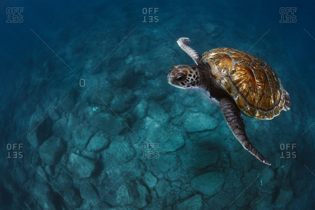 Close-up of sea turtles swimming underwater