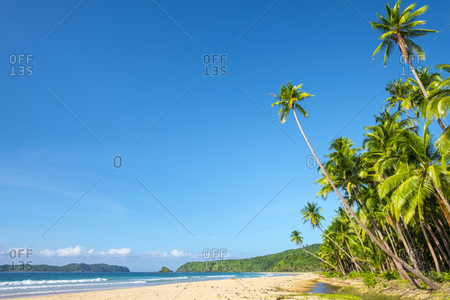 Palm trees along the white sand beach at Nacpan Beach, El Nido