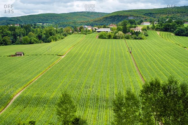 Green Corn Field Lot Valley, Calvignac, Midi-Pyr�n�es, France