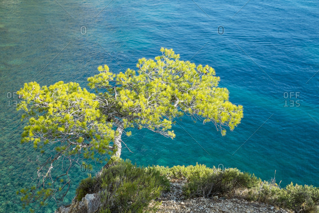 Pine tree growing from rocky ledge over blue water, Provence, France