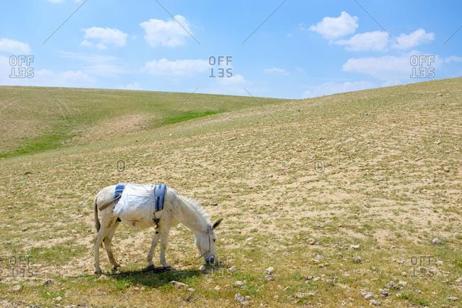 Bedouin horse grazes in Ar Rawlin village, near Arab ar Rashaydah, West Bank, Palestine