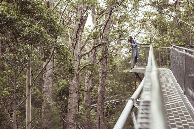 Androgynous figure looks down from great heights on tree top walk