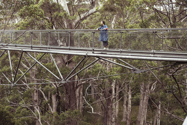 figure in blue stands high up in tall tree forrest on tree top walk