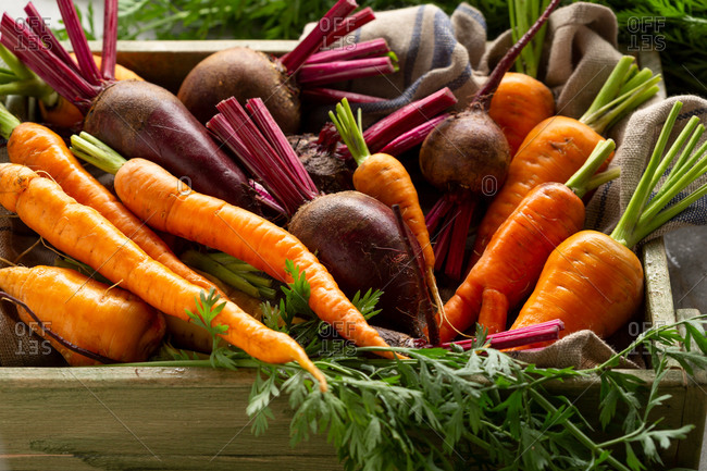 Harvest of beets and carrots