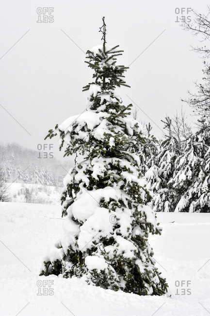 Late heavy snowfall in spring