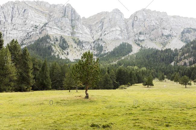 Green meadow in cadi mountain landscape