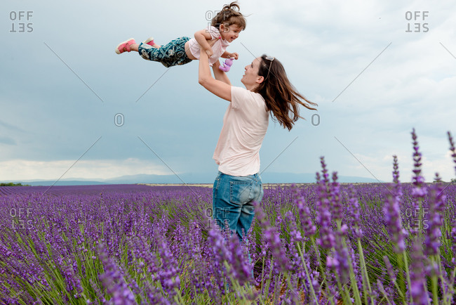 Woman throwing little girl in the air among lavender fields in summer