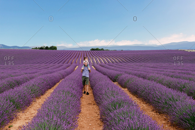 Father and little girl walking among lavender fields in the summer