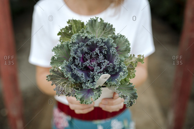 Dark green leafy plant held by woman at nursery
