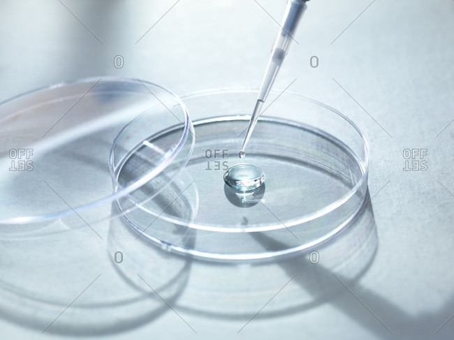 Close-up of sample pipetting in petri dish for experiment at laboratory