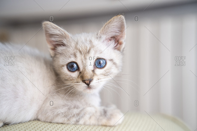 Close-up portrait of cute small kitten sitting on sofa at home