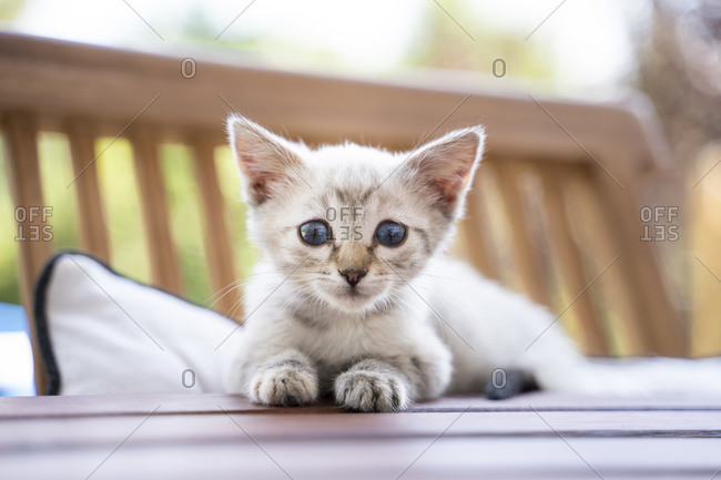 Close-up portrait of cute kitten sitting on table