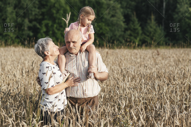 Family portrait of grandparents with their granddaughter in an oat field
