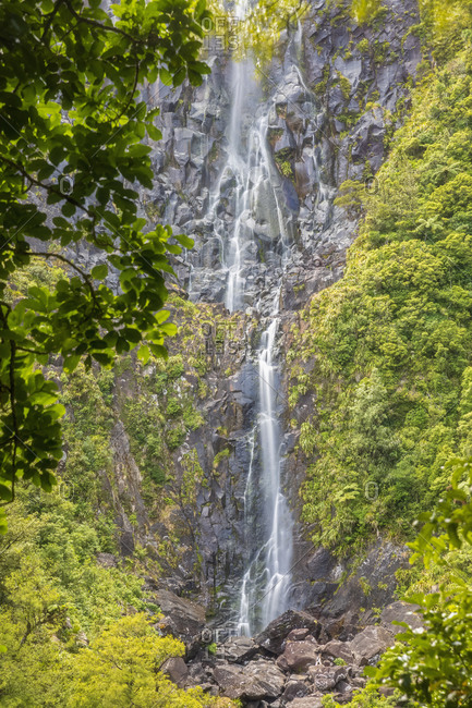 Scenic view of Wairere Falls in forest at North Island New Zealand