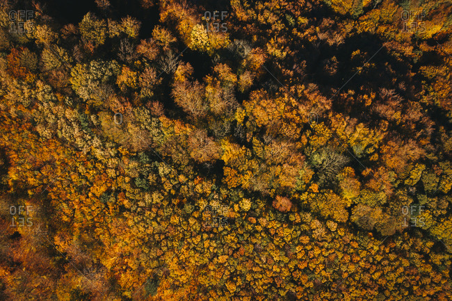 Austria- Lower Austria- aerial view of colorful autumn forest