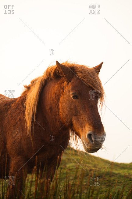 Portrait of beautiful brown horse in the mountain on a foggy day