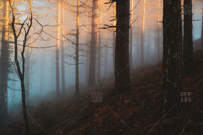 Sunset light illuminating the trees through the fog
